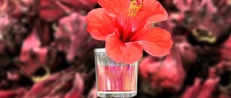 настойка на каркаде (суданской розе)