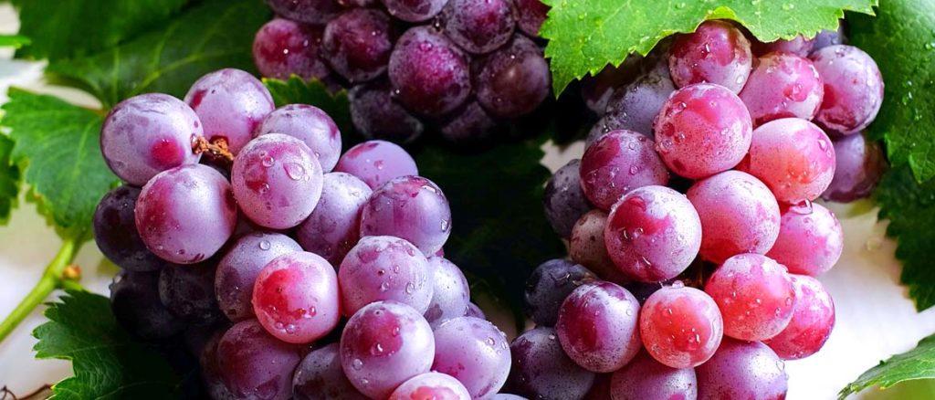 выбор винограда для самогона