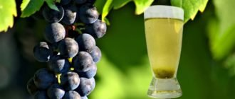 самогон из винограда - чача или граппа